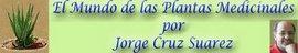 ARTICULO DE www.nuestrasislascanarias.com
